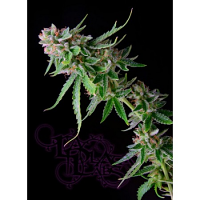 La Plata Labs Green Alien Feminized