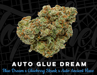 Top Shelf Elite Seeds Auto Glue Dream Feminized