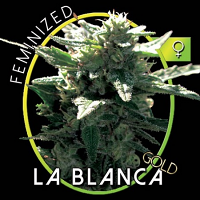 Vision Seeds La Blanca Gold Feminized