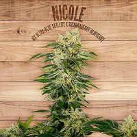 The Plant Organic Seeds Nicole Feminized