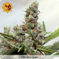 Barney's Farm Seeds CBD Blue Shark Feminized (PICK N MIX)