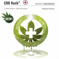 Dutch Passion Seeds CBD Kush Feminized