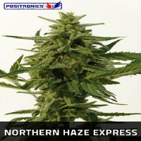 Positronics Seeds Northern Haze Express Auto Feminised