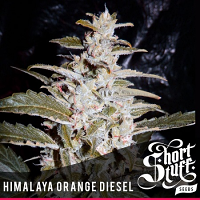 Shortstuff Seeds Himalaya Orange Diesel Auto Feminized