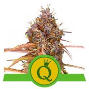 Purple Queen Auto - Feminized - Royal Queen Seeds