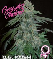 O.G. Kush - Feminized - Growers Choice