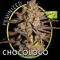 Vision Seeds Choco Bud Feminized