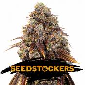 Gelato 41 - Feminized - Seed Stockers