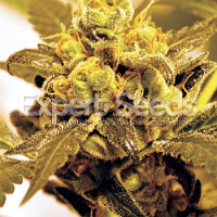 Expert Seeds Fruit Salad Feminized (PICK N MIX)