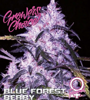 Blue Forest Berry - Feminized - Growers Ghoice