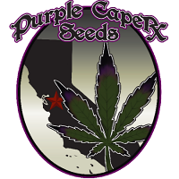 Purple Caper Seeds Zkittlez BX Regular