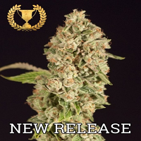 Devil's Harvest Seeds OG Reekn Feminized