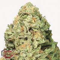 Heavyweight Seeds Fruit Punch Feminized
