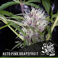 Shortstuff Seeds Auto Pink Grapefruit Feminised