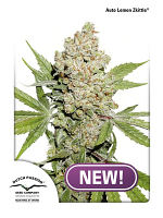 Dutch Passion Seeds Auto Lemon Zkittle Feminized