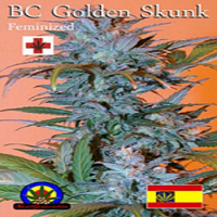 Next Generation Seeds BC Golden Skunk Feminized