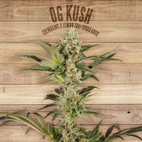 The Plant Organic Seeds O.G. Kush Feminized