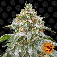 Barney's Farm Seeds Pink Kush Feminized (PICK N MIX)