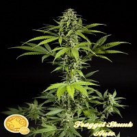 Philosopher Seeds Fraggle Skunk Auto Feminized