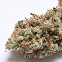 Cake Bomb - Regular - Prolific Coast Seeds