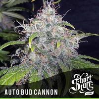 Shortstuff Seeds Auto Bud Canon Feminized