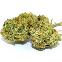 Bulk Seeds Lemon Diesel Feminized