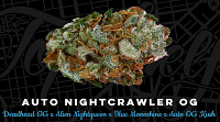 Top Shelf Elite Seeds Auto Nightcrawler O.G. Feminized