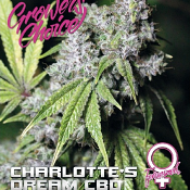 Charlotte's Dream CBD - Feminized - Growers Choice