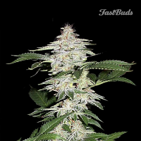 FastBuds Seeds Cristal METH Auto Feminized (PICK N MIX)