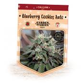 Blueberry Cookies Auto – Feminized – Garden of Green