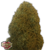 Heavyweight Seeds Champion Feminized