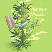 Sherbert Mimosa - Feminized - Penthouse Cannabis
