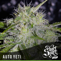 Shortstuff Seeds Auto Yeti Feminised
