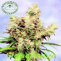 Sagarmatha Seeds Stonehadge Regular