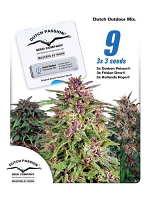 Dutch Passion Seeds Dutch Outdoor Mix Feminized