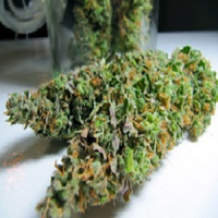 BC Bud Depot Seeds Sweet Island Skunk Regular