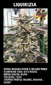 Liquirizia - Feminized - Black Farm Genetix