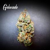 Gelonade - Feminized - Tastebudz