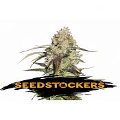Runtz - Feminized - Seed Stockers