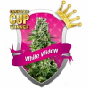 Royal Queen Seed White Widow Feminized (PICK N MIX)