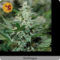 Barney's Farm Seeds Red Dragon Feminised