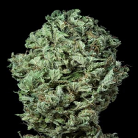 Dinafem Seeds Sour Diesel Auto Feminized PICK N MIX