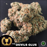 Devil's Harvest Seeds The Devil's Glue Feminized