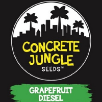 Concrete Jungle Seeds Grapefruit Diesel Feminized