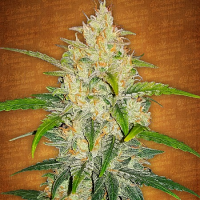 FastBuds Seeds Zkittlez Auto Feminized (PICK N MIX)
