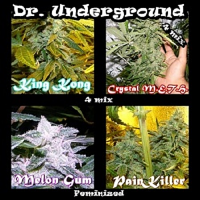 Dr Underground Seeds Killer Mix Feminized