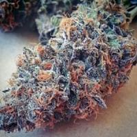 BC Bud Depot Seeds Ultimate Purple Regular