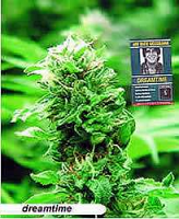 Mr Nice Seeds Dreamtime Regular