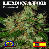 Next Generation Seeds Lemonator Feminzed