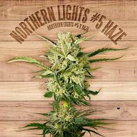 The Plant Organic Seeds Northern Lights #5 Haze Feminized